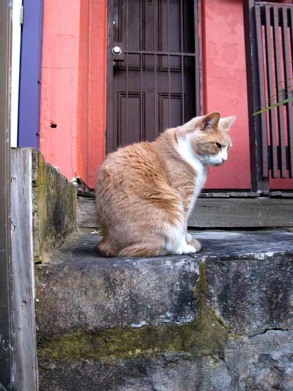 Ginger Glebe Cat