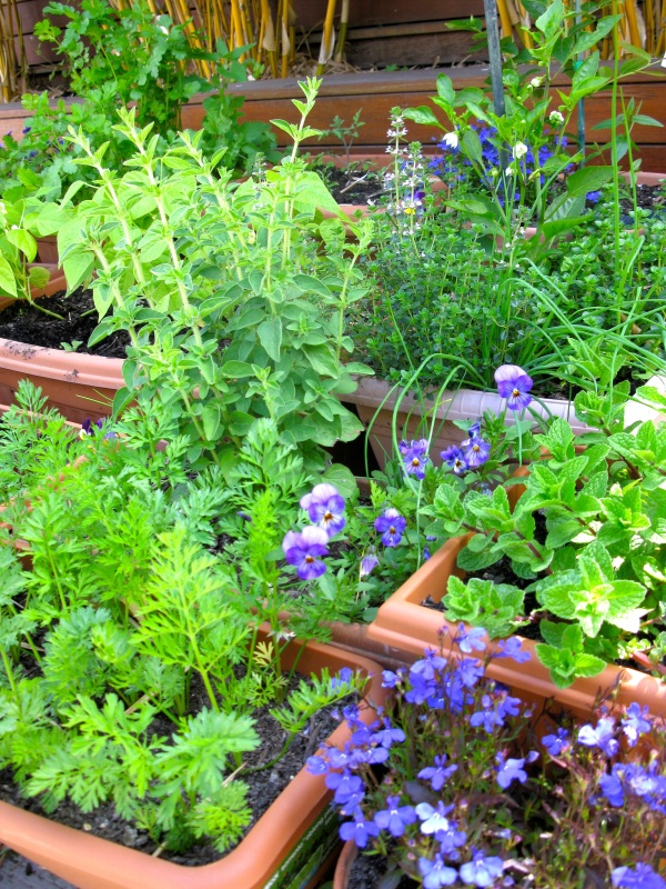 Herbs, carrots, capsicum plants and flowers