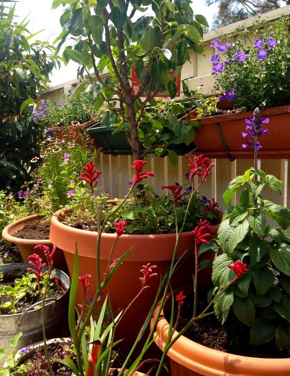 Pots in Julia's garden